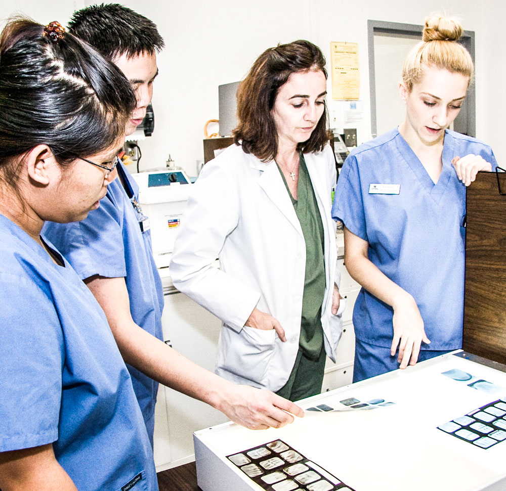Students get pracitcal training in radiographs during a denal assisting class.